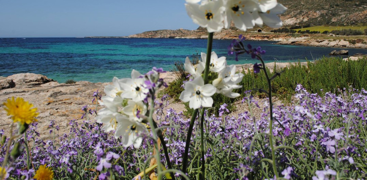 natura_mare_sea_favignana